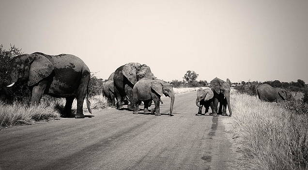 Herd of Elephant in Kruger  by James  Wasdell