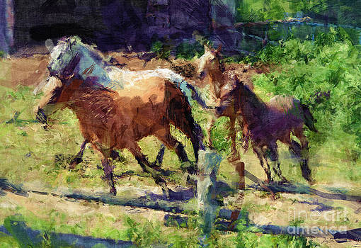 Herding Them Home by Skye Ryan-Evans