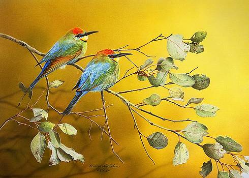 Here Comes The Sun - Rainbow Bee-Eaters by Frances McMahon
