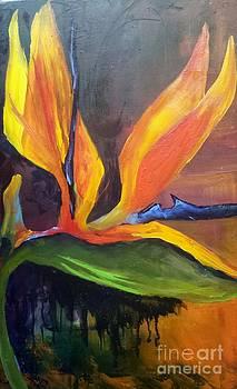 Here I Am Bird of Paradise by Barbara Haviland