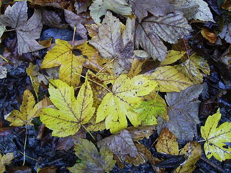 Herfstbladeren in verval by Ton Bocxe