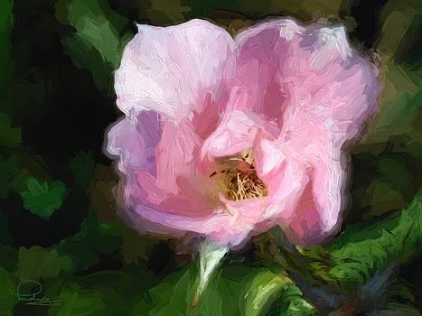 Ludwig Keck - Heritage Rose