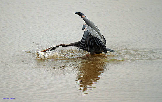 Heron and Carp by Ed Nicholles