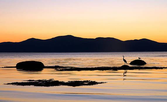 Heron and the St. Lawrence. La Pocatiere. Quebec by Rob Huntley