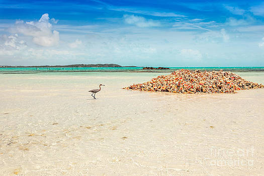 Jo Ann Snover - Heron approaches conch pile