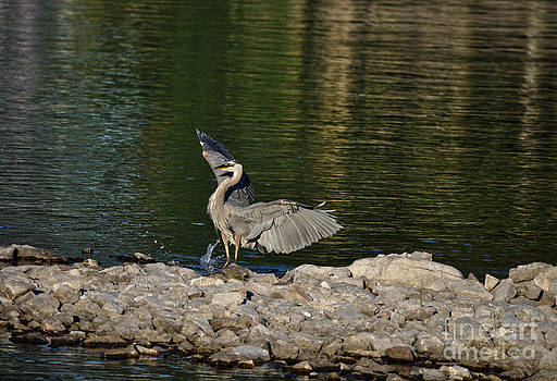 Heron At Attention by Skye Ryan-Evans