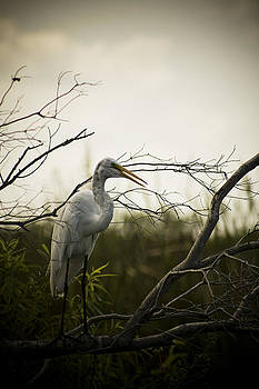 Heron At Dusk by Bradley R Youngberg