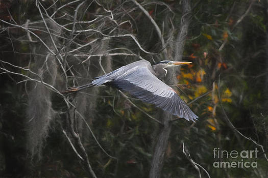 Deborah Benoit - Heron Beauty and Grace