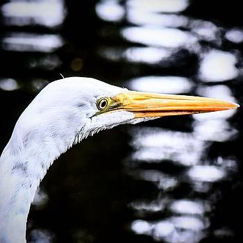Heron Hoping For #animalsbydl by David Lopez