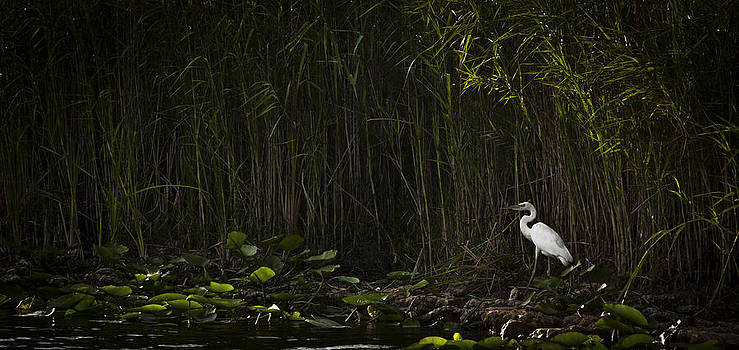 Heron In Grass by Bradley R Youngberg