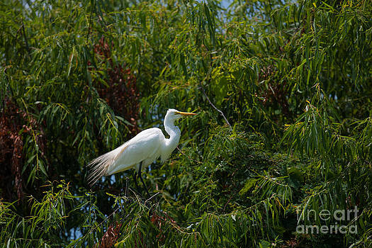 Dale Powell - Heron in Tree