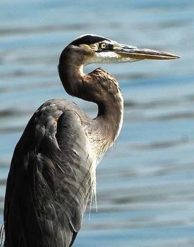 Heron Lake Livingston Tx by Jerry Moffett
