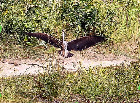 Heron Landing by Carolyn Reinhart