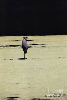 Heron by Lorelle Gromus