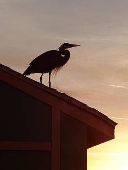 Christine Stack - Heron on a Roof