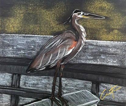 Heron on Hunting Island Fishing Dock by Cristel Mol-Dellepoort
