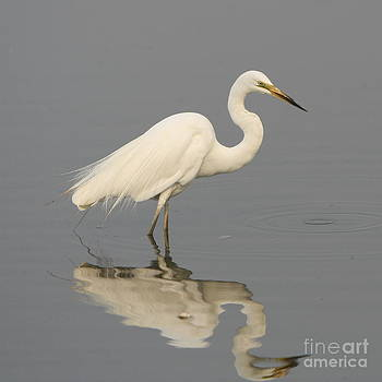 Heron Reflections by Craig Dingle