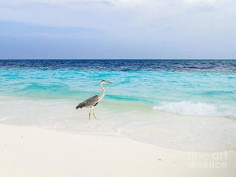 Hannes Cmarits - heron takes a walk at the beach