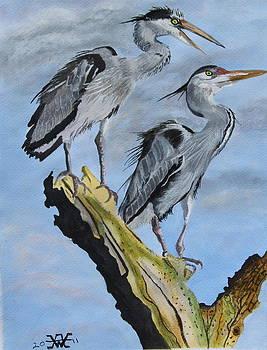 Herons. by Alan Wilkinson