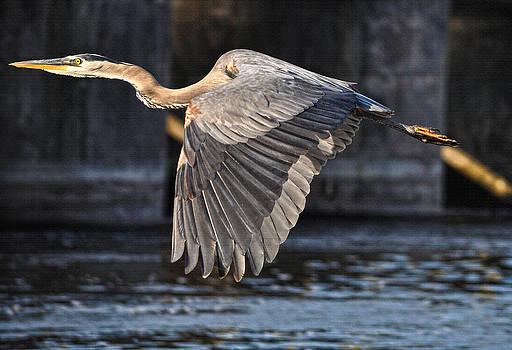 Heron's Departure by Skye Ryan-Evans