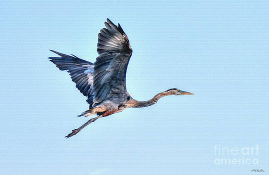 Heron's Journey by Skye Ryan-Evans