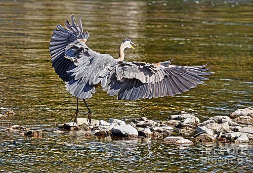 Heron's Landing by Skye Ryan-Evans