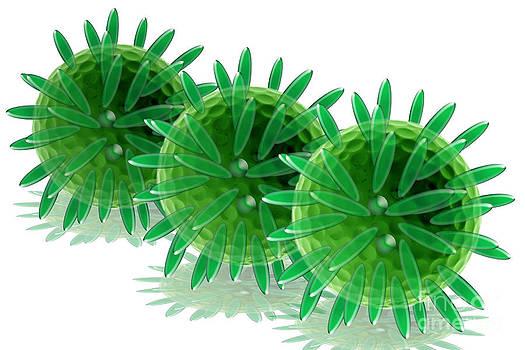 Sigrid Gombert - Herpes Virus Particles
