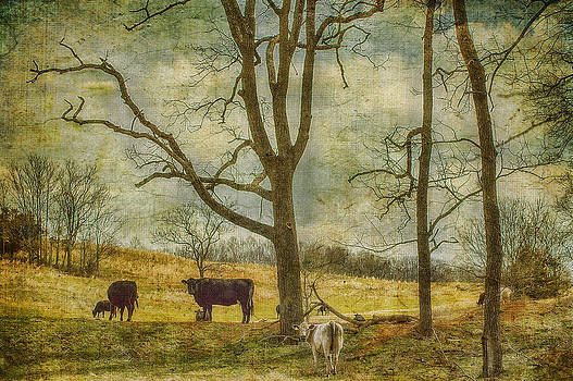Hey Cow by Kathy Jennings