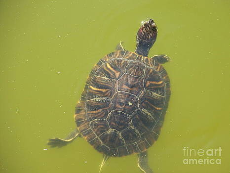 Hi There Turtle by Kevin Croitz