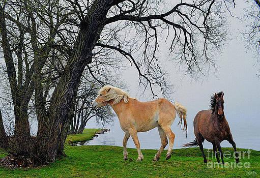 Hiawatha's Horses by Skye Ryan-Evans