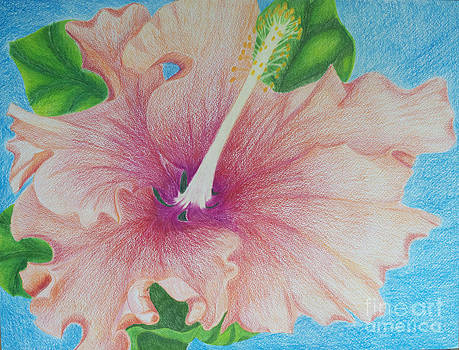 Hibiscus by Cecilia Stevens