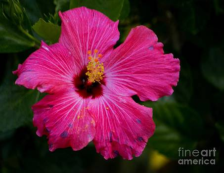 Hibiscus in Motion Series Part 1 by Imani  Morales