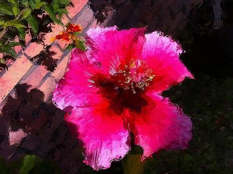 Hibiscus in the sun by Lyn Pacific