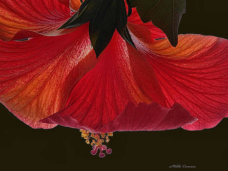 Hibiscus on black by Mikki Cucuzzo