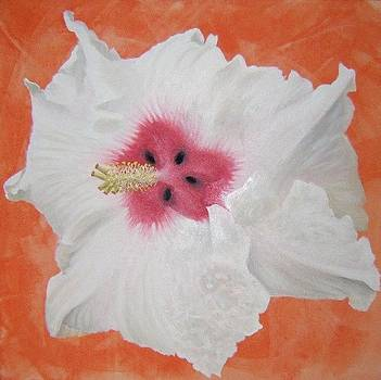 Hibiscus by Wagner Chaves