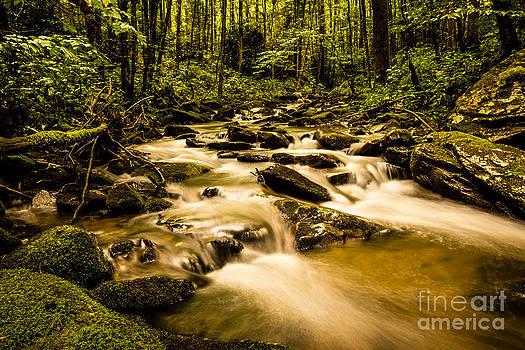 Hidden Creek by Jennifer Marie Nature Exposed