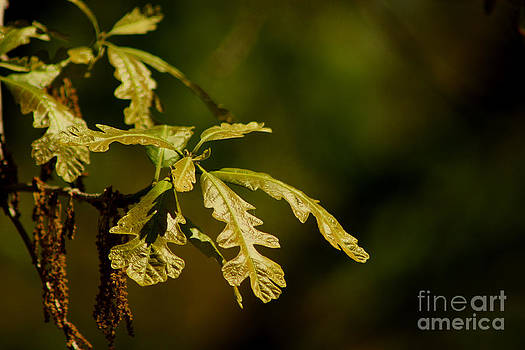 Hidden Leaves with a green back ground by Robert D  Brozek