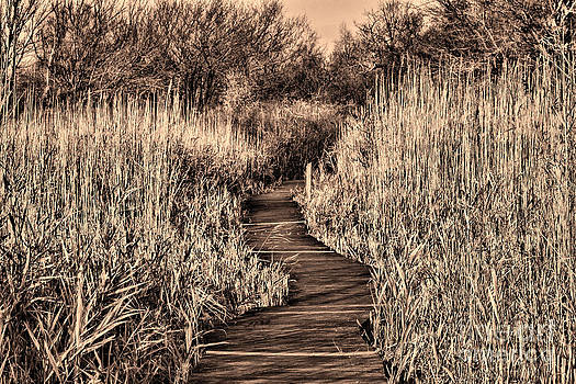 Hidden Path by Kristy Ollis
