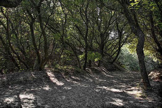 Erika Fawcett - Hidden Pathway