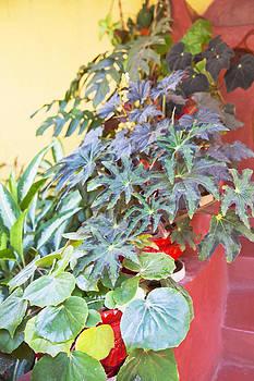 Kantilal Patel - Hidden Plant Pots