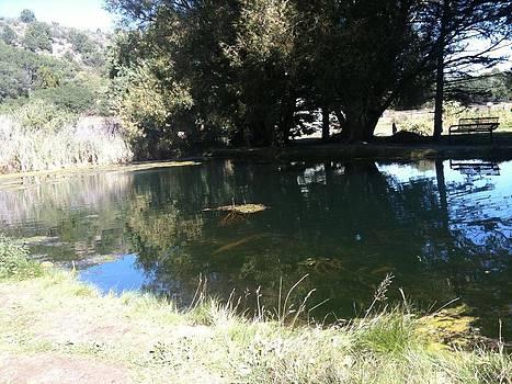 Hidden Pond by Gina Bonelli