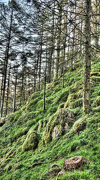 Weston Westmoreland - Hidden Rocks of the Larch Forest