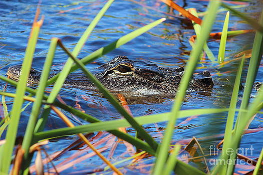 Hide and Gator by Andre Turner