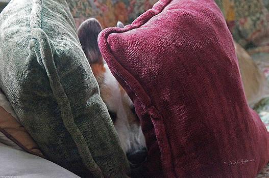 Mick Anderson - Hide and Sleep