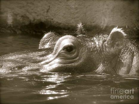 Hiding Hippo by Sherri Williams