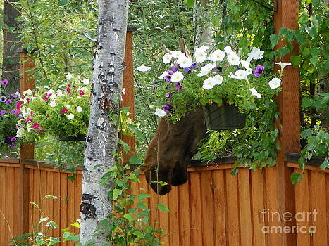 Hiding Moose by Jennifer Kimberly