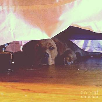 Rachel Barrett - Hiding Under the Bed