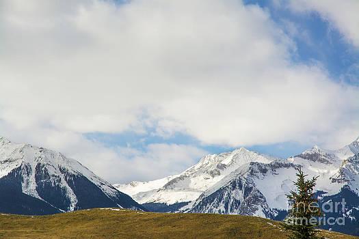 Tim Mulina - High Alpine