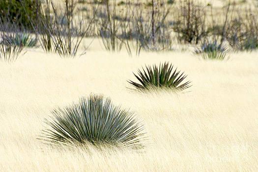 Douglas Taylor - HIGH DESERT GRASSLAND