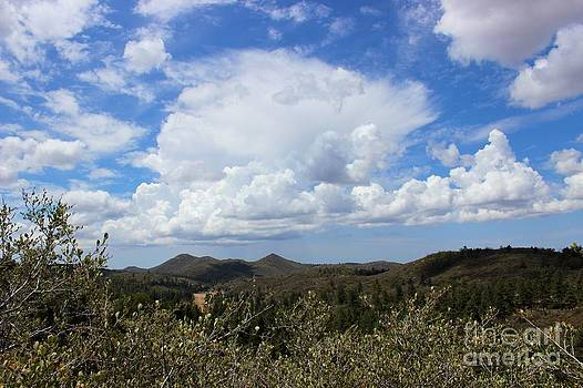 High Desert by Laura Paine